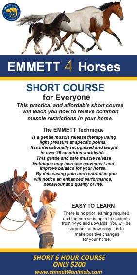 Emmett for Horses